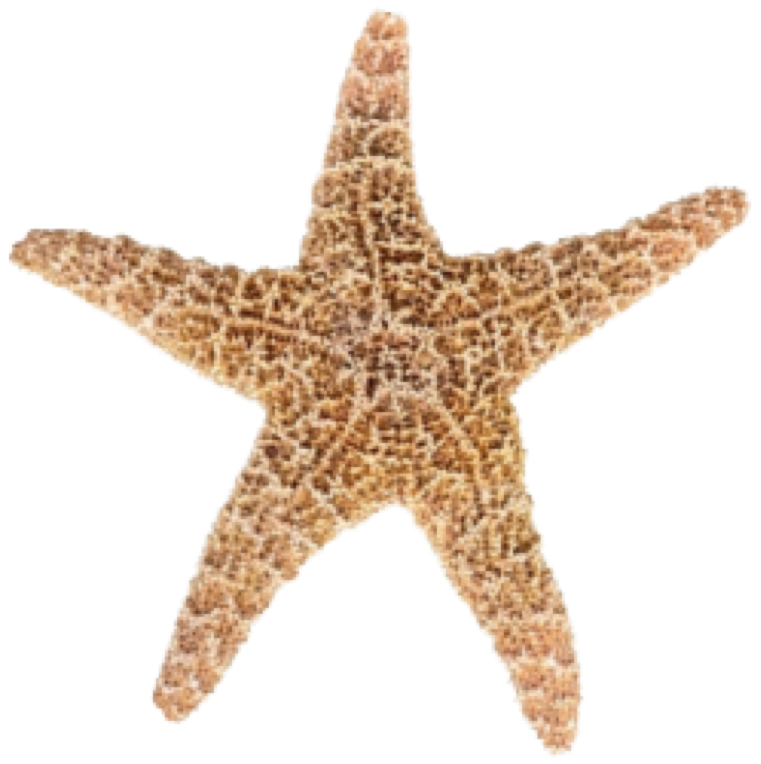 Designs Starfish Png image #19874