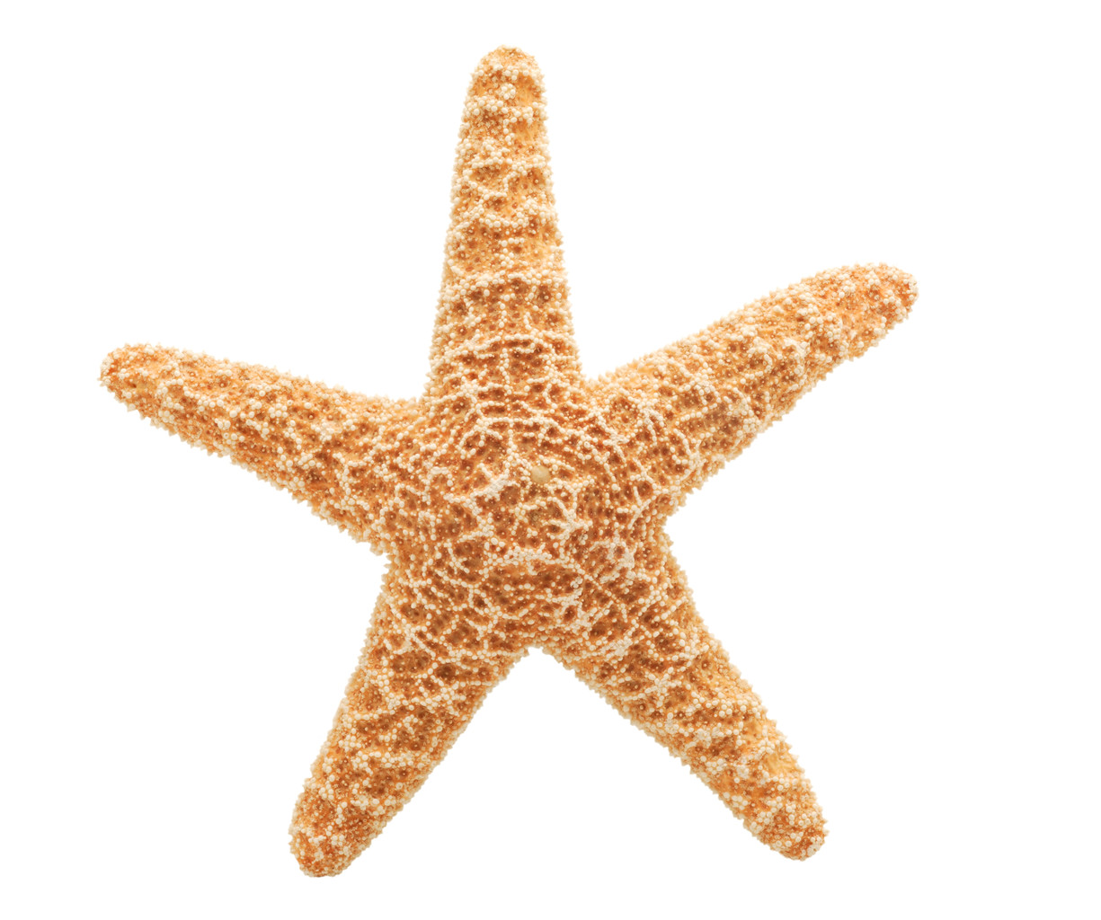 High-quality Starfish Cliparts For Free! image #19857