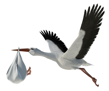 Transparent Image PNG Storch