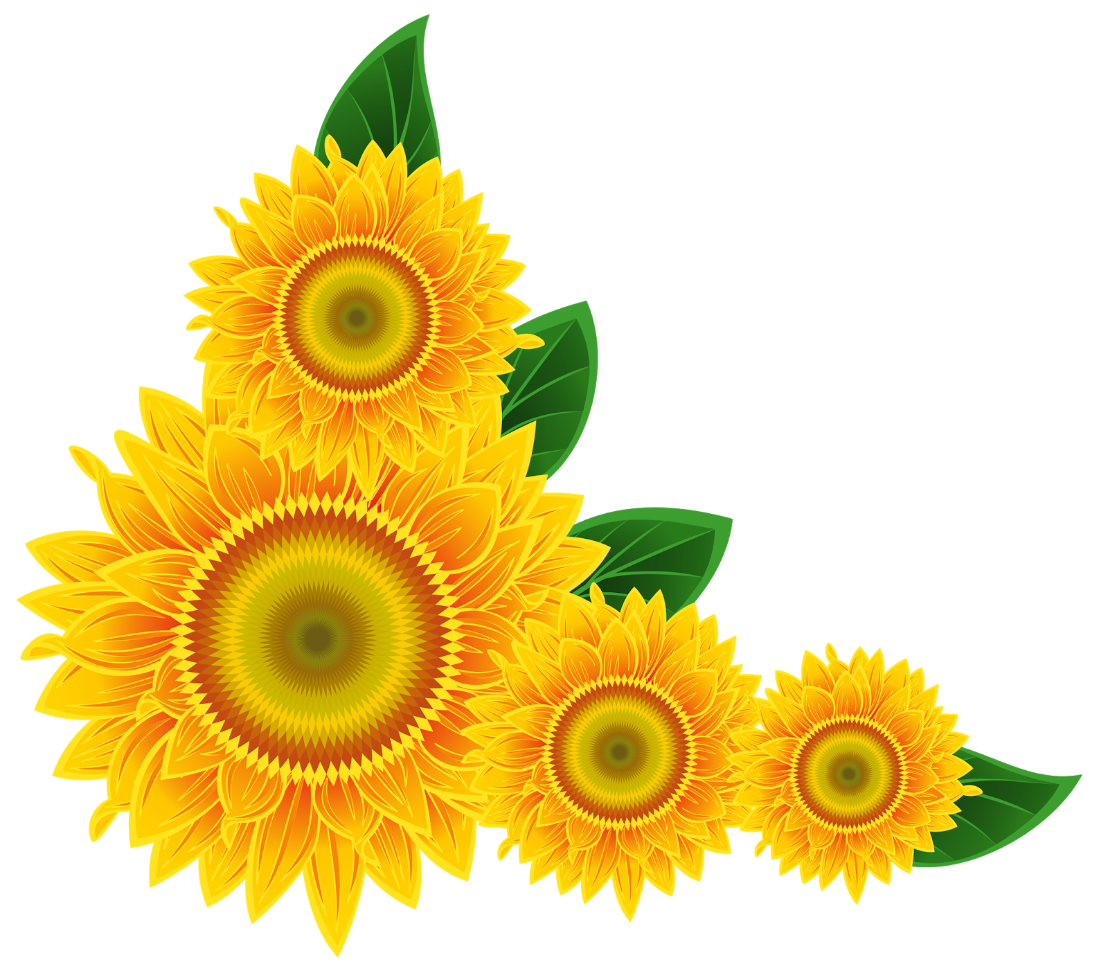 Sunflower PNG Image