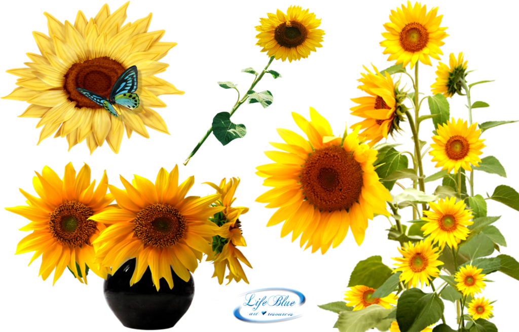 Download Sunflower Latest Version 2018 28719 Free Icons
