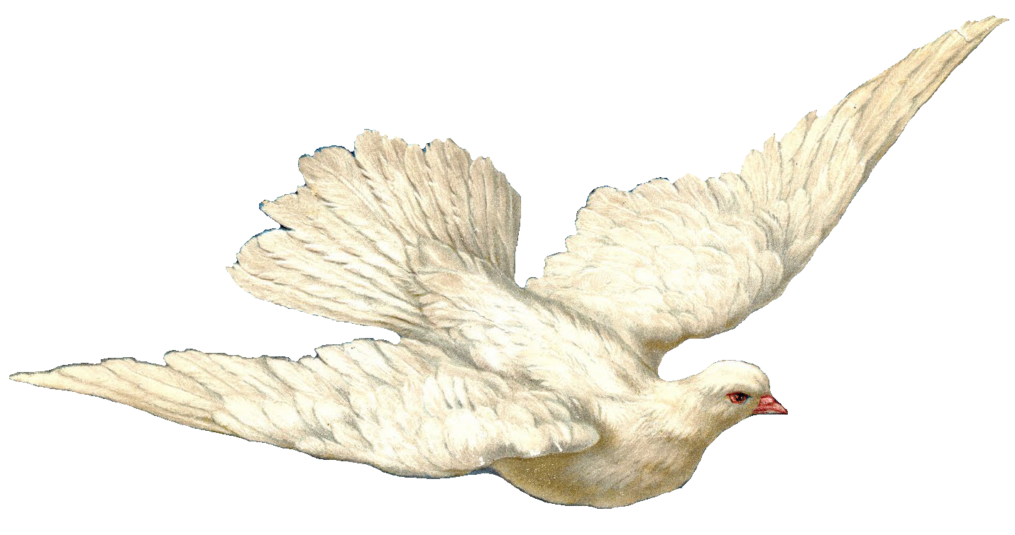 Swallow And Dove PNG