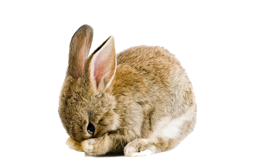 sweet rabbit png