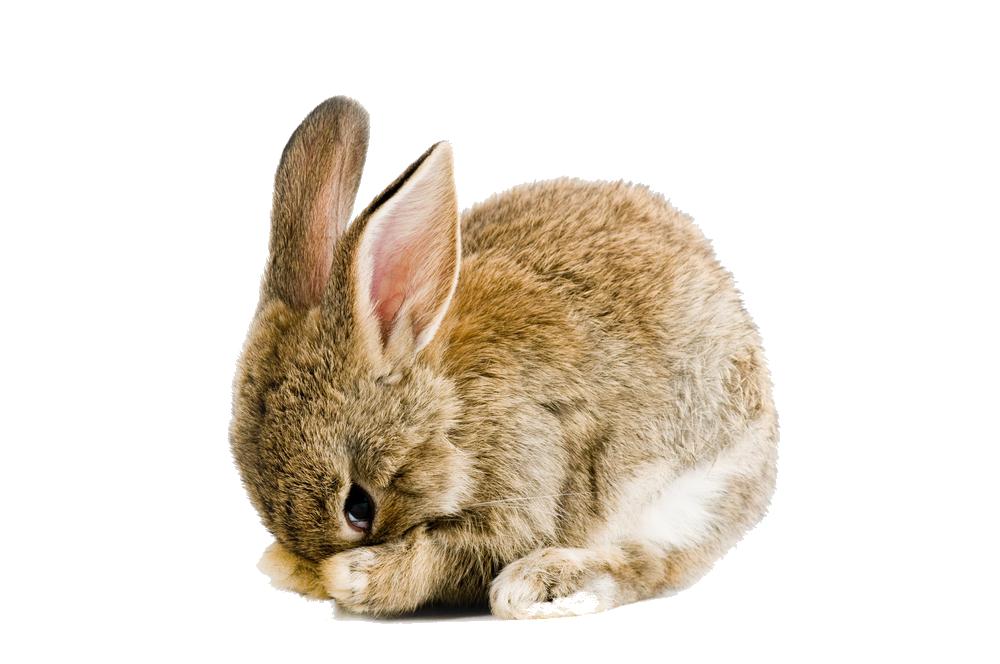 Sweet Rabbit Png image #40327