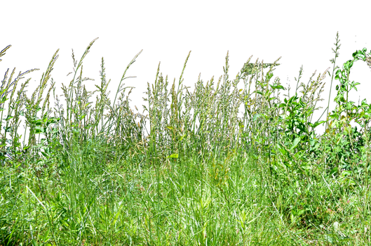 Tall Grass Background Image