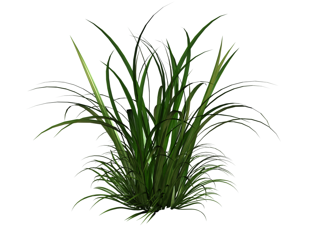 Tall Grass Clipart image #44178
