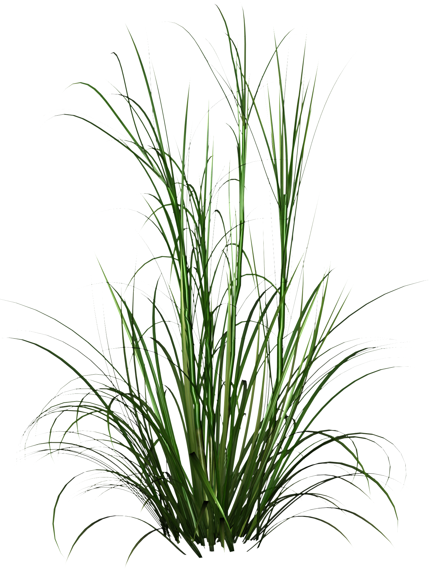 Tall Grass Png HD Photo image #44170