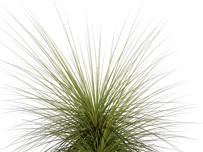 Tall Grass Png Images & Pictures