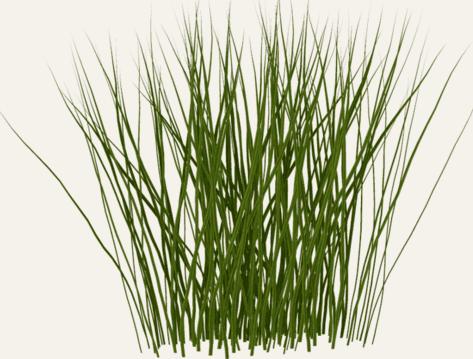 Tall Grass Png Photos image #44155