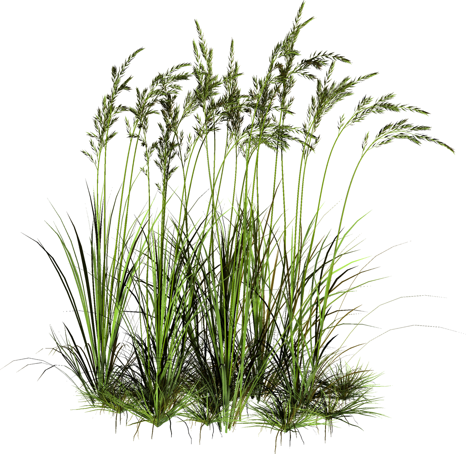 Tall Grass Png Pic