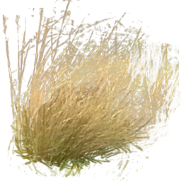 Tall Grass Png Pictures image #44168