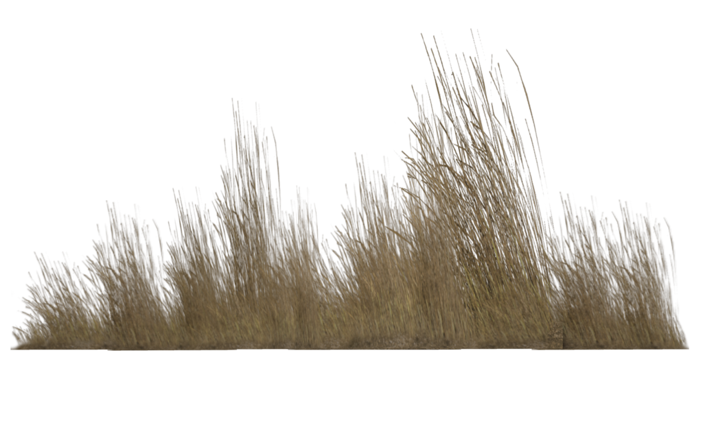 Tall Grass Png Transparent