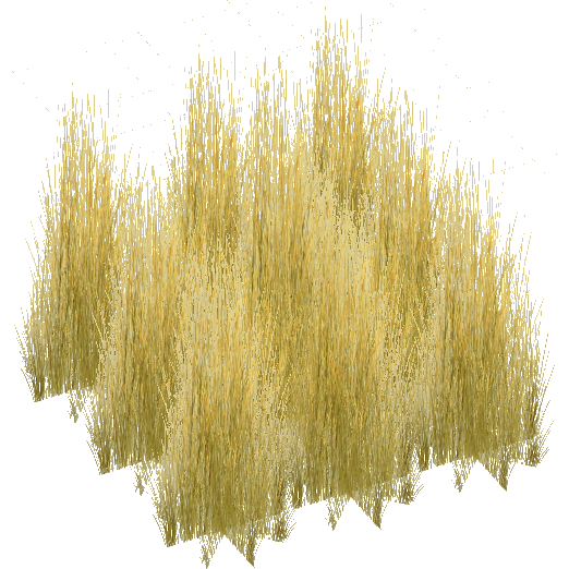 Tall Grass Texture Png image #44167