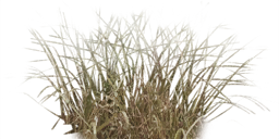Tall Grass Texture Png image #44172