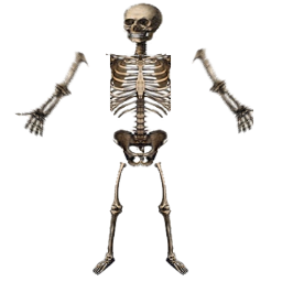 Texture Skeleton Png image #5344