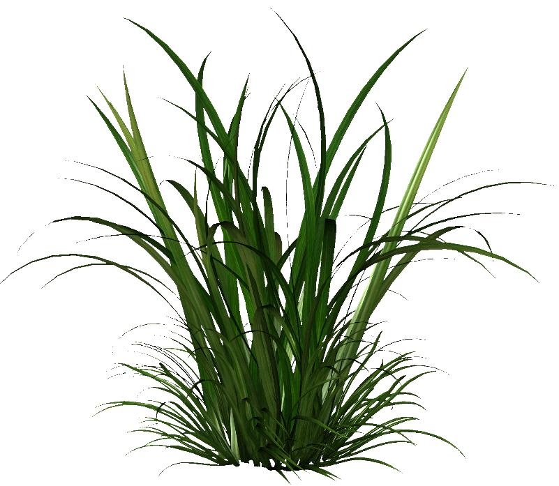 The Gallery Tall Grass Png image #44171