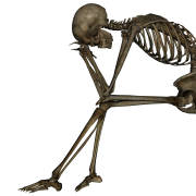 thinking skeleton png