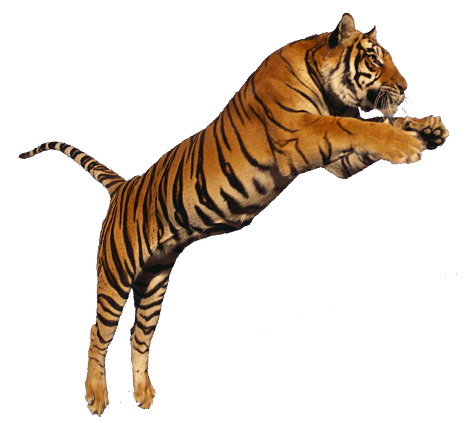 Collection Clipart Png Tiger image #39182