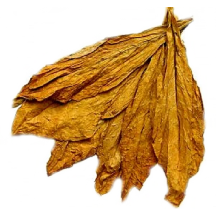 tobacco leaf picture