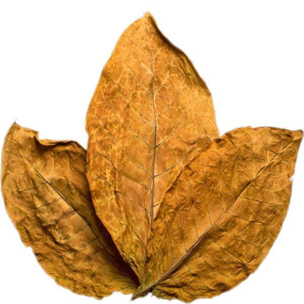 Tobacco Leaf Transparent PNG Image image #48039