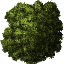Top Tree Transparent Background Png image #4127