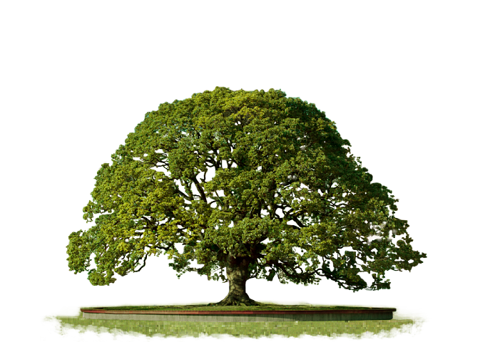 Clipart PNG Top Tree