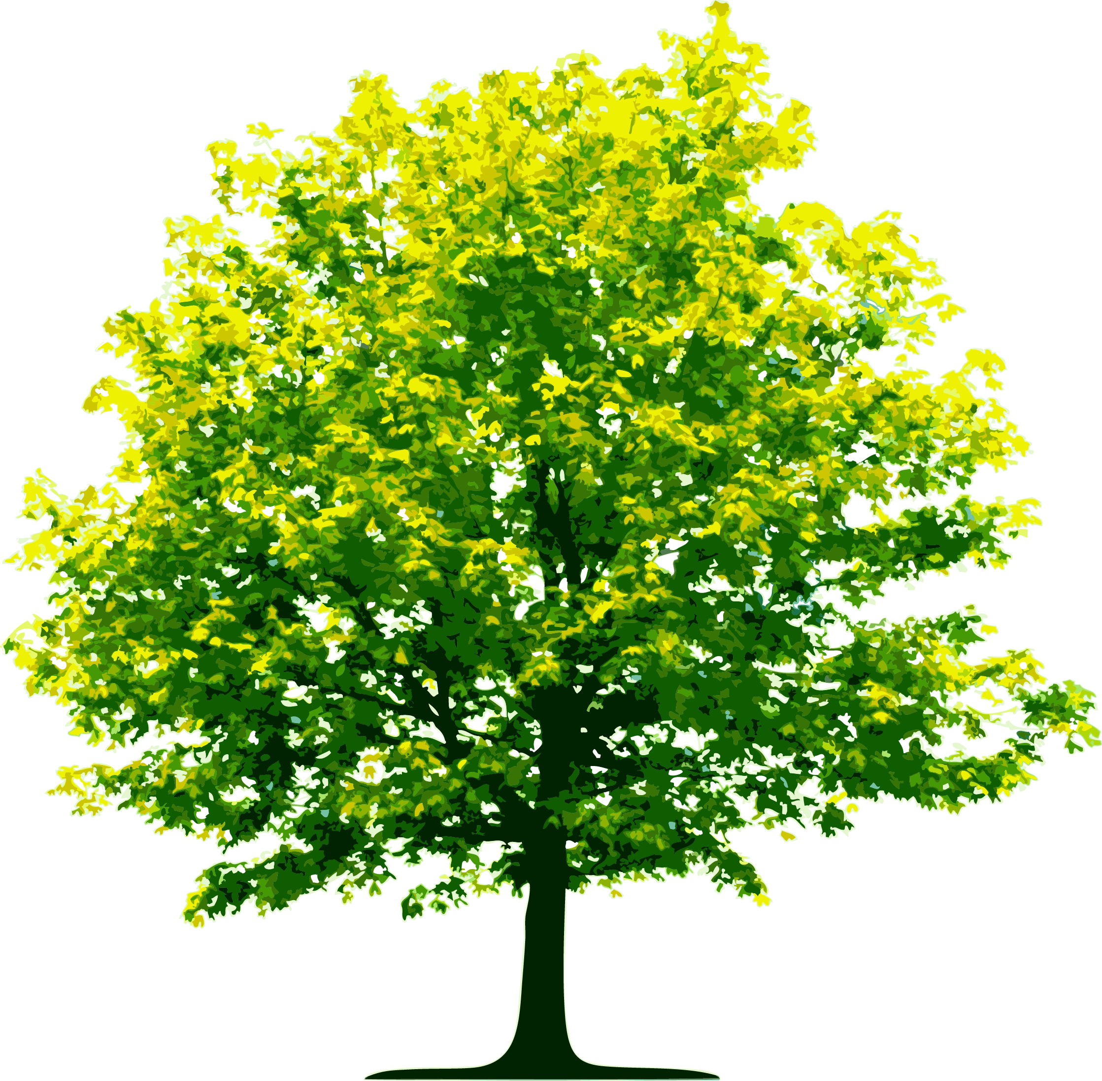 Clipart Tree Best Png image #756