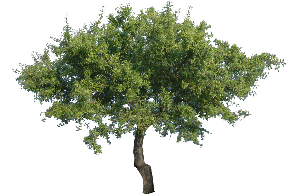 Vector Png Tree