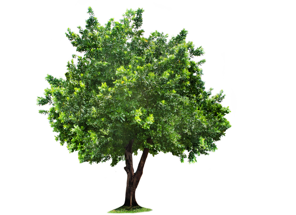 Tree Png Images Free Icons And Png Backgrounds