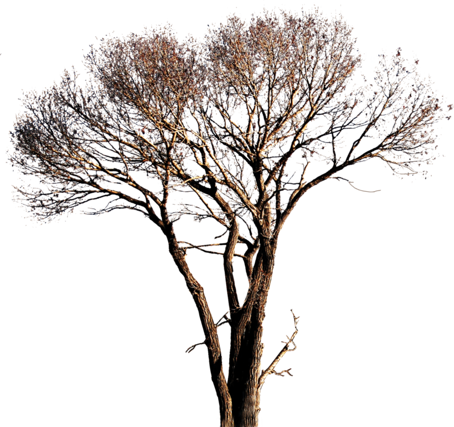 Png Tree Vector image #794