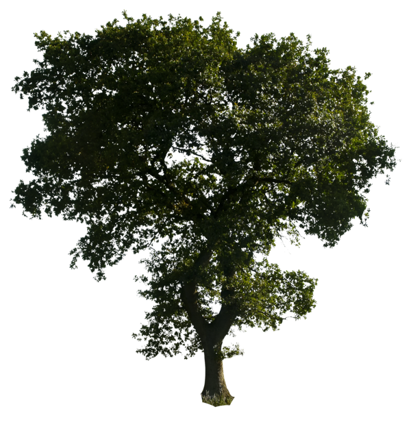 Tree 52 Png By Gd08 On DeviantArt image #789