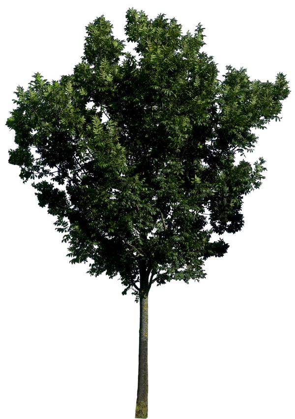Tree 56 Png HQ By Gd08 On DeviantArt image #757