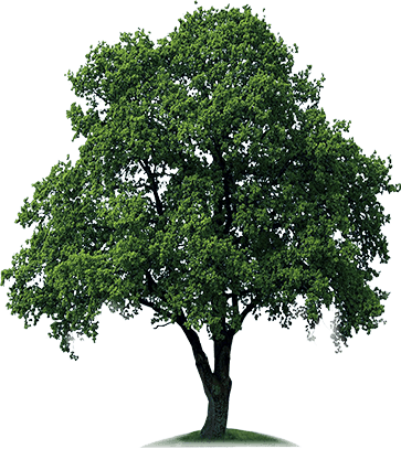 Download Free High quality Tree Png Transparent Images