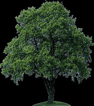 Tree image #725