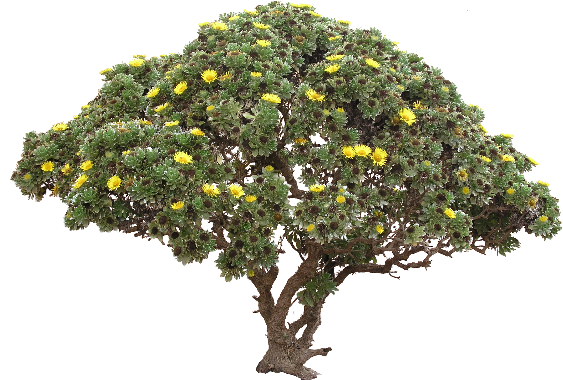 Tree Bush Png
