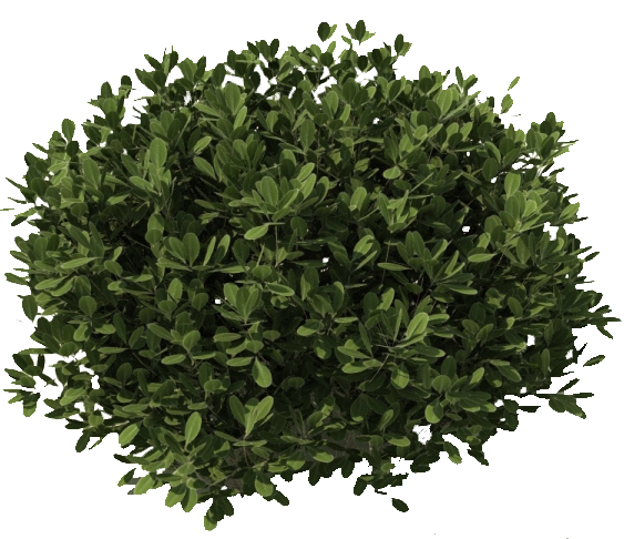 tree bushes plants png