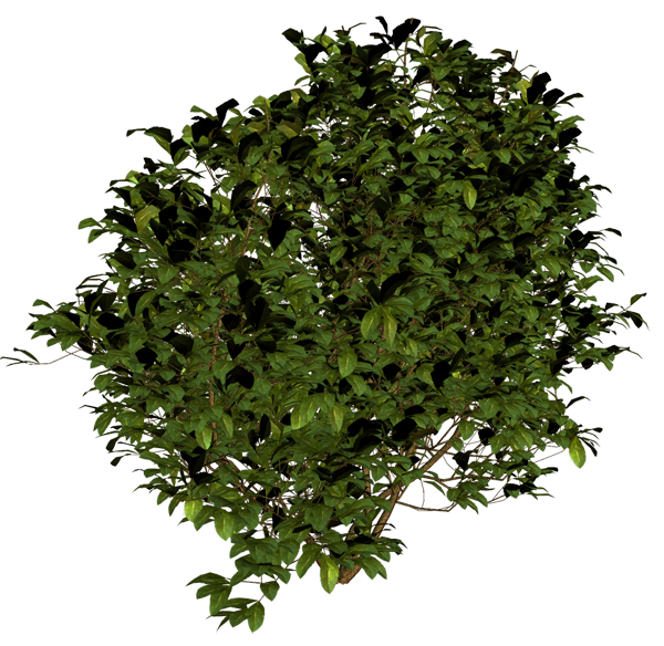 Tree Bushes Plants Png image #42044