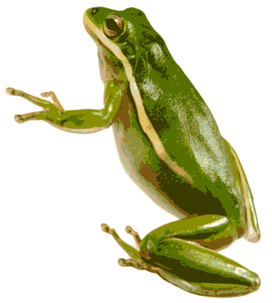 Tree Frog Png image #43155