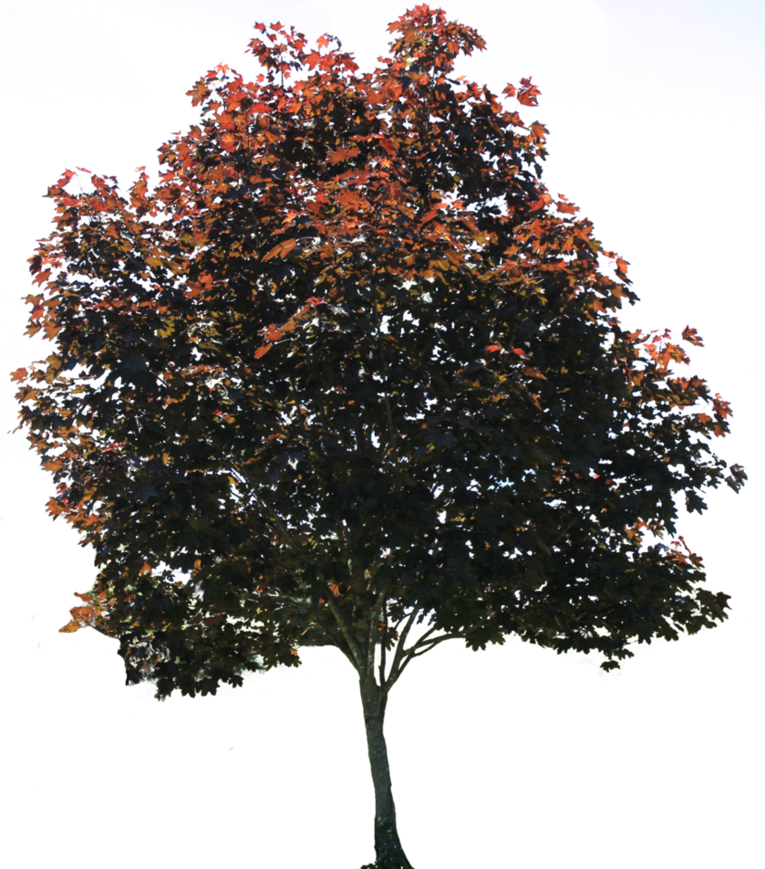 Tree PNG 01 By Thy Darkest Hour On DeviantArt image #791