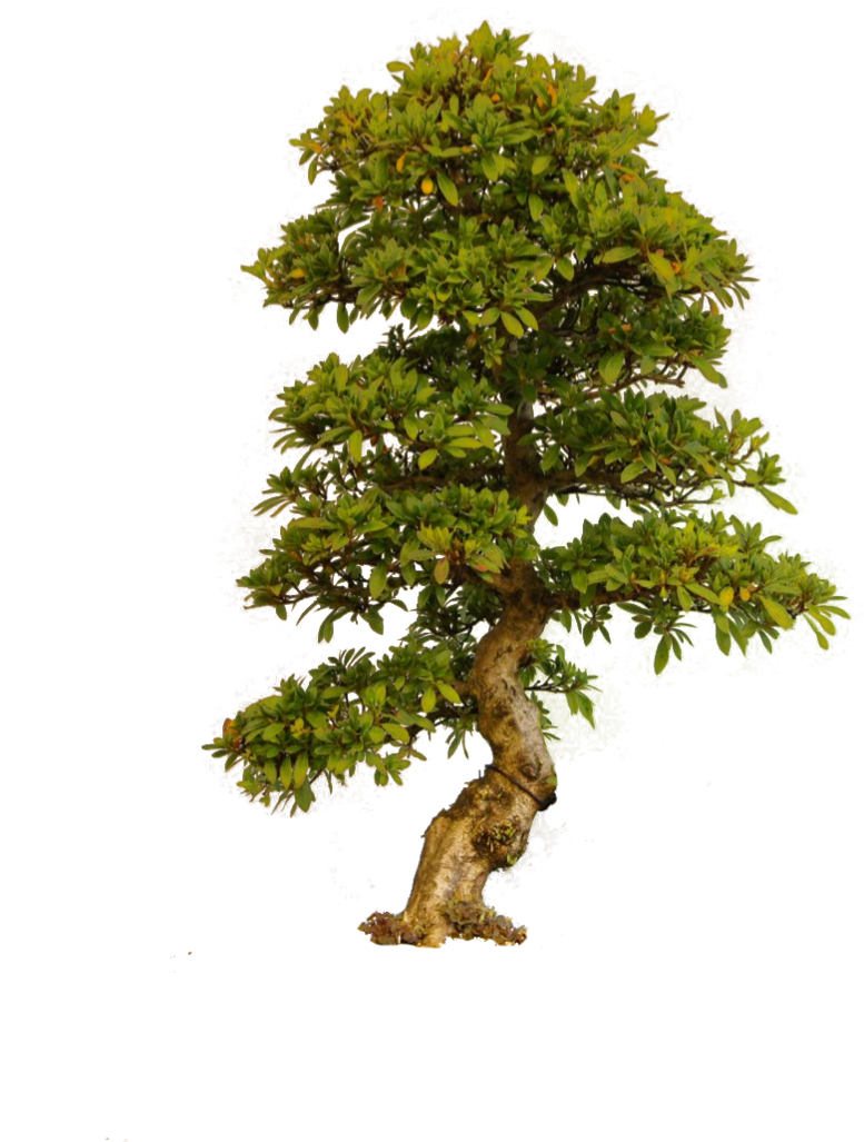 PNG Tree Transparent image #781