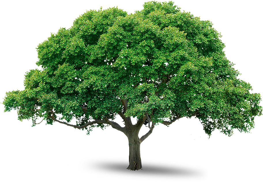 Tree Icon Download image #730