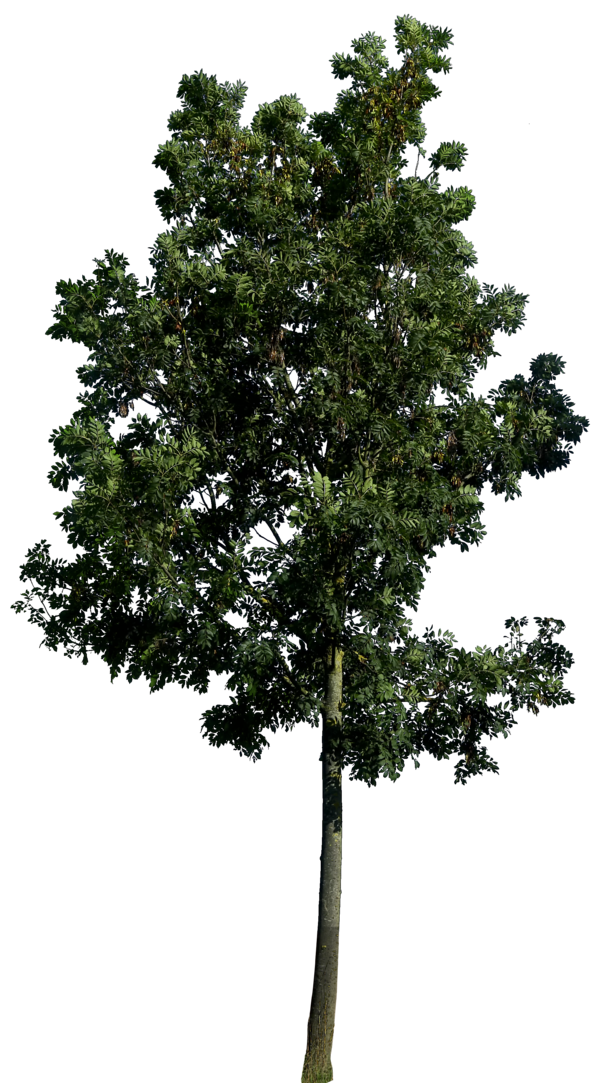 Best Free Tree Png Image