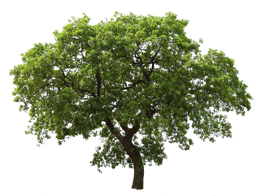 High-quality Tree Cliparts For Free! image #710