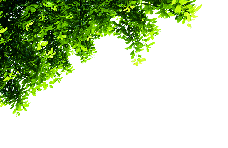 Top Tree Transparent Background image #4153