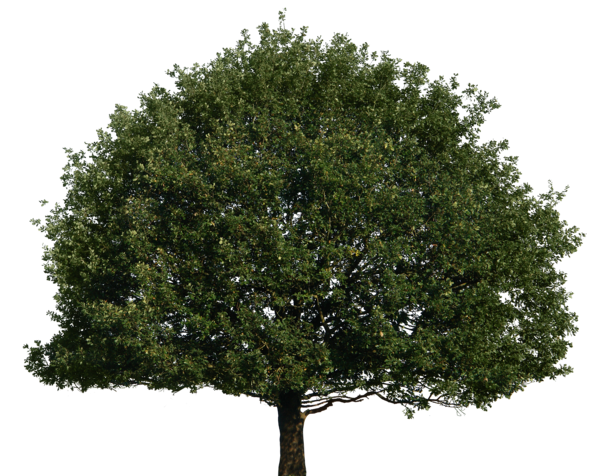 Tree Top Png Tree image #4145