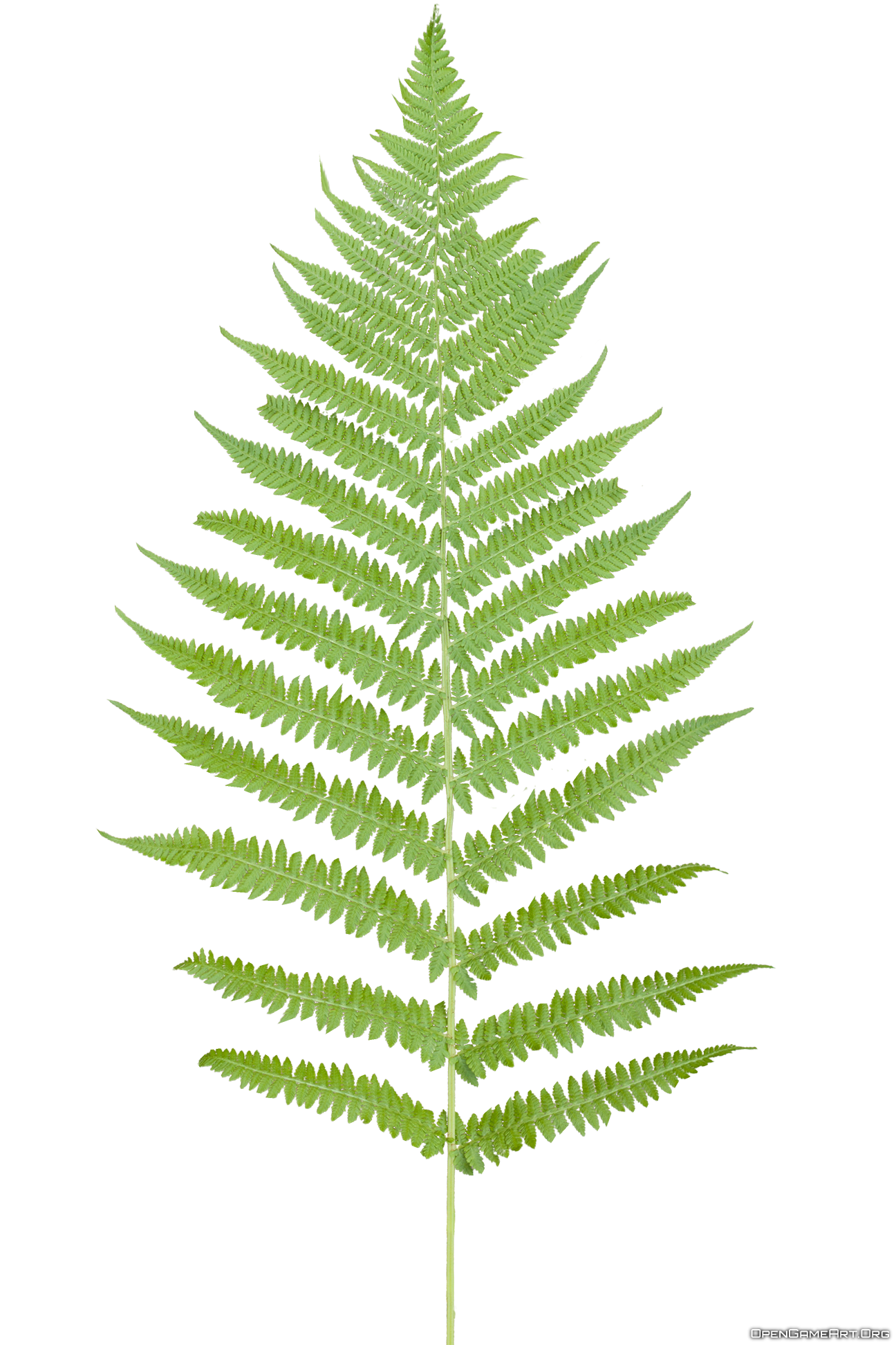 Tropical Ferns Png image #26185