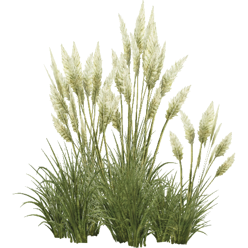 Tropical Tall Grass Png image #44176