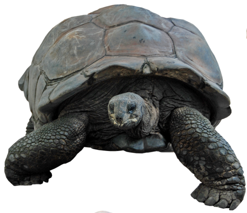 Download Turtle High quality Png