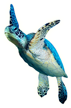 Picture Png Turtle 22688 Free Icons And Png Backgrounds