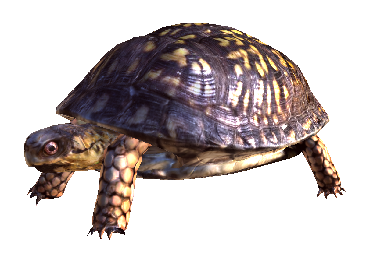 Best Collections Png Image Turtle